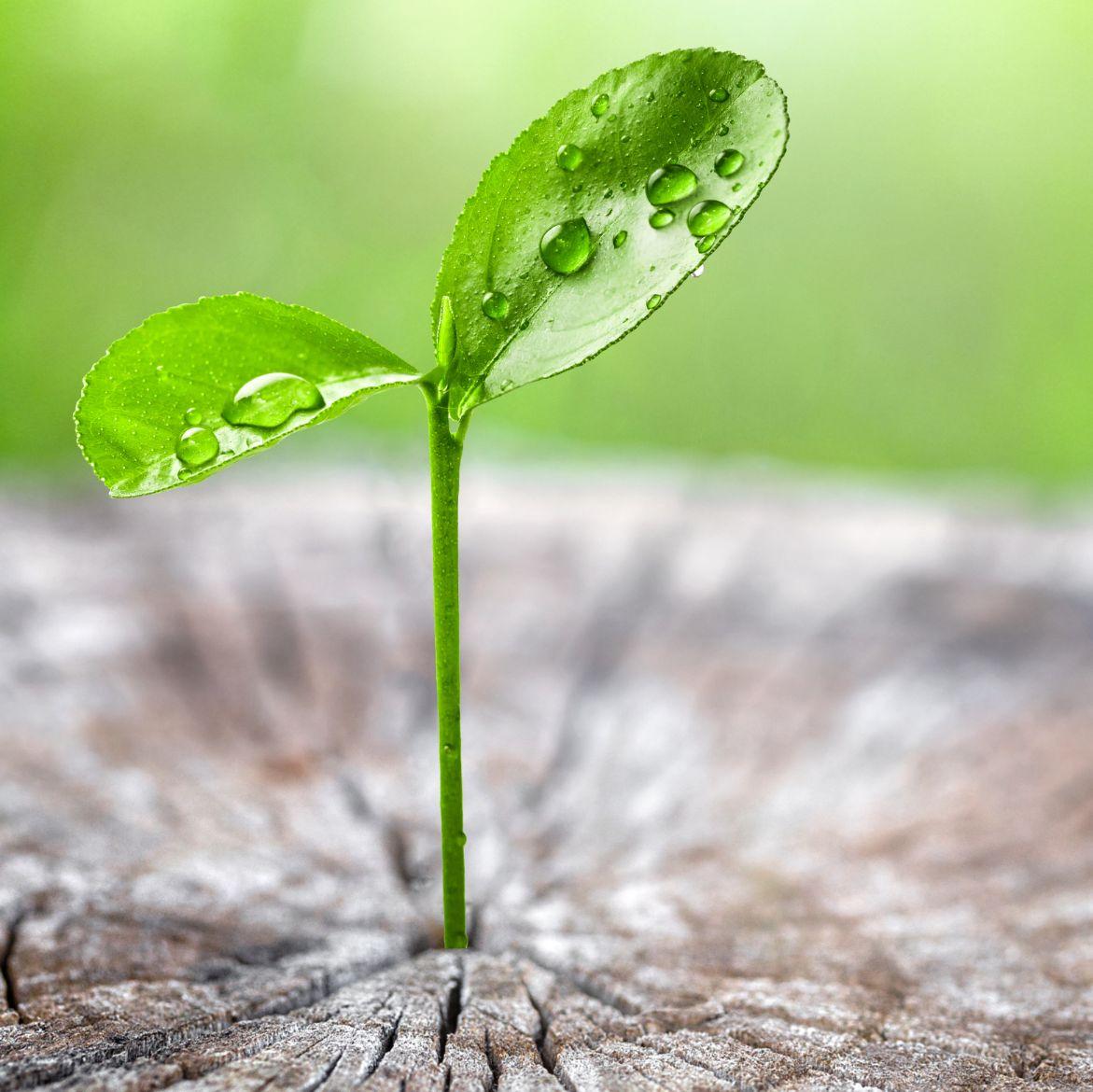 persoonlijke ontwikkeling anneke oliehoek plant druppel vierkant